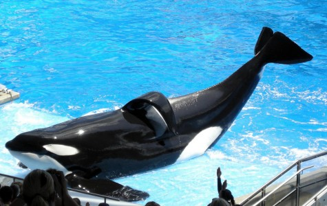 Orca whales finally get justice